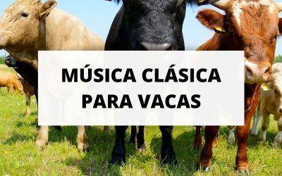Conciertos de música clásica para vacas en Dinamarca